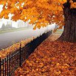 October 2015 Challenge – Autumn