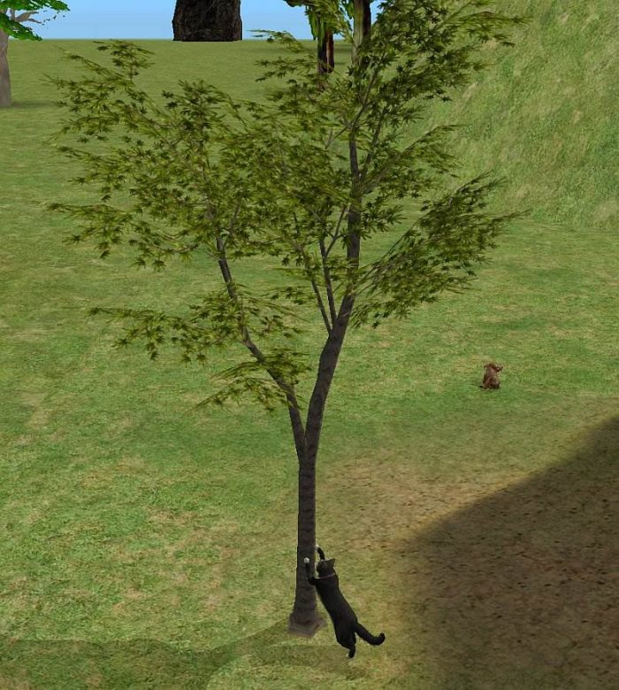 Scratch Post Mapple Tree
