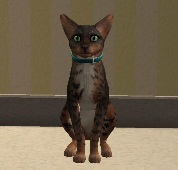 Crystal Arlington - Cat