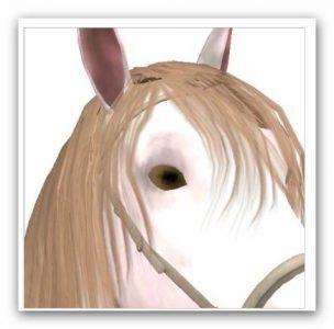 Whisper - Beautiful but untaimed horse